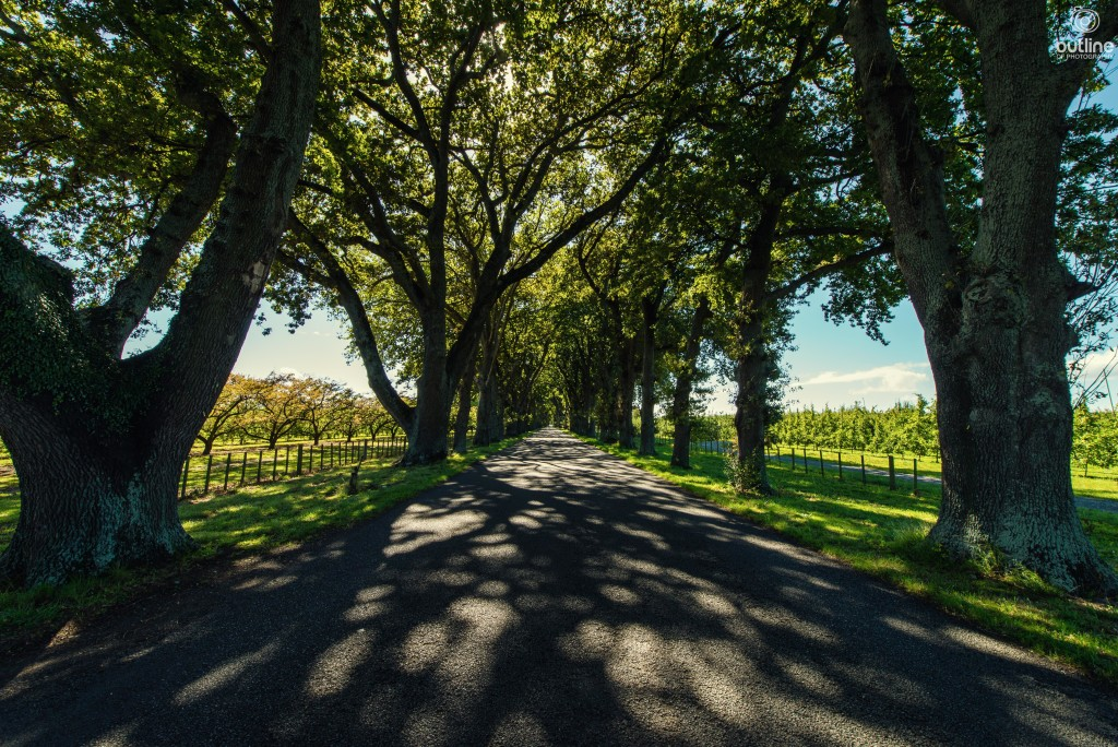 Oak Avenue, Hastings, Hawkes Bay, New Zealand